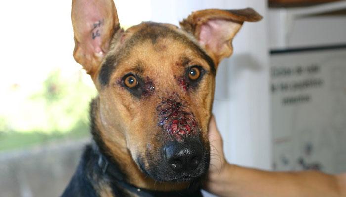 Dermatologie vétérinaire