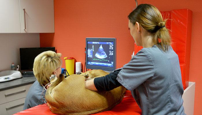 Echographie vétérinaire