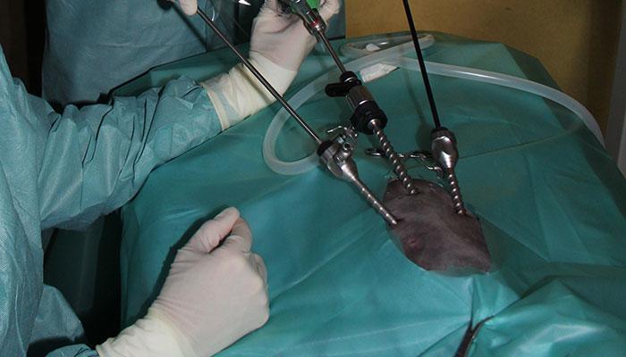 Endochirurgie vétérinaire