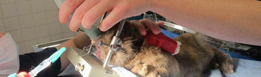 Anesthésie vétérinaire