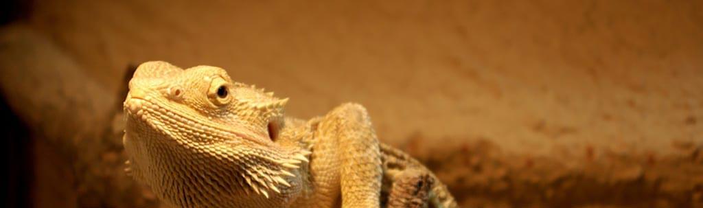 Conseils reptiles