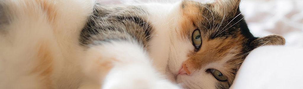 Endoscopie vétérinaire