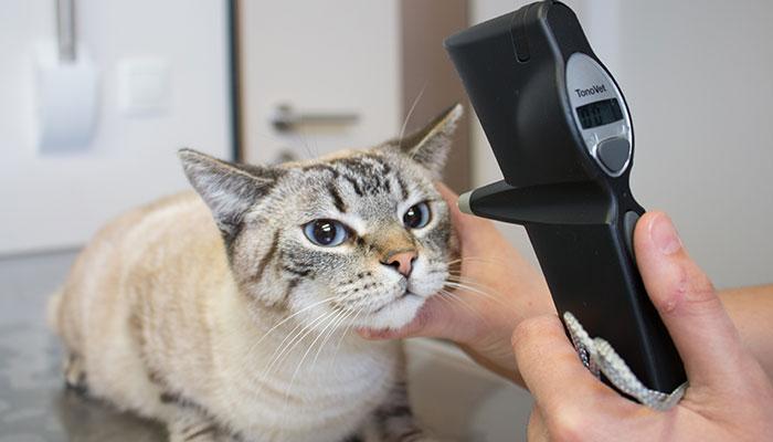 Ophtalmologie vétérinaire